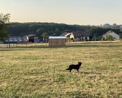 Ferme équestre - Remiremont - Le Sarcenot à Poney