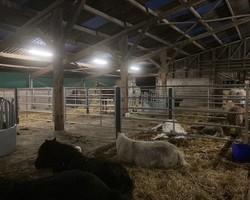 Ferme Tourisme Equestre - Remiremont - Sarcenot à Poney