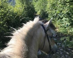 Demi-pension poney - Remiremont - Le Sarcenot à Poney